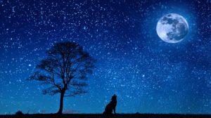 drzewo noc